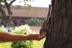 squirrel sara